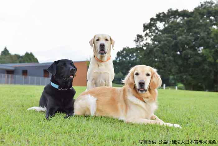 3頭の犬が並ぶ写真