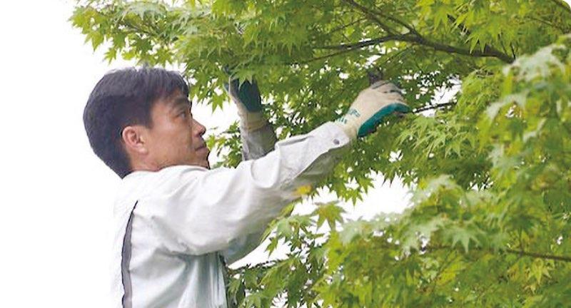 庭木の剪定・草刈りサービス