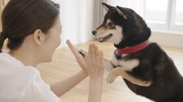 サニクリーンテレビCM「ペットも喜ぶサニクリーン編」(レンジフードフィルター15秒)