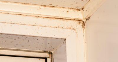 浴室や窓のゴムパッキン。カビ取り剤でカビが落ちない4つの理由