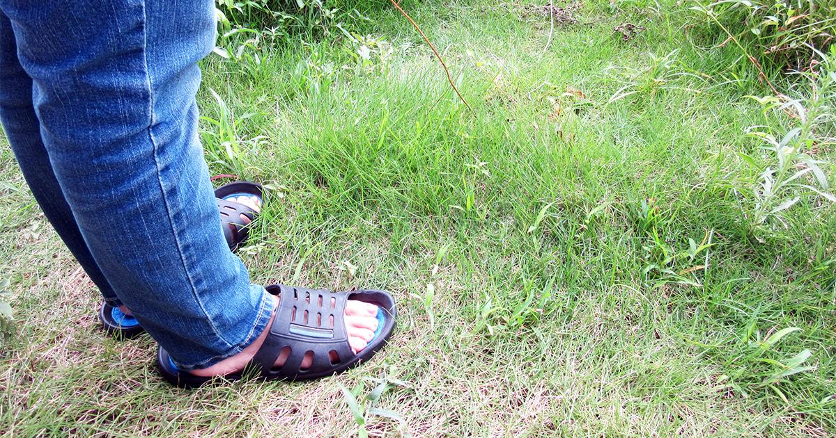 長い草と素足