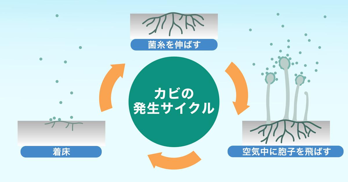 カビの発生サイクルを示したイラスト